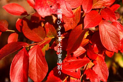 風邪_e0099713_20351197.jpg