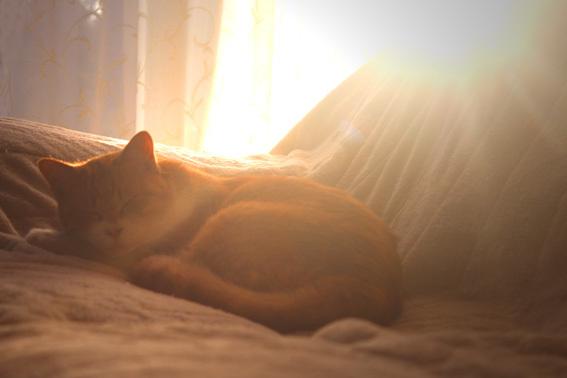 愛猫の可愛いお墓_a0329820_13295591.jpg