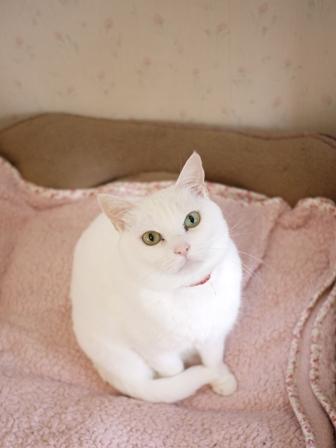 猫のお留守番 ゆきちゃんゆめくんあられくん編。_a0143140_20571220.jpg