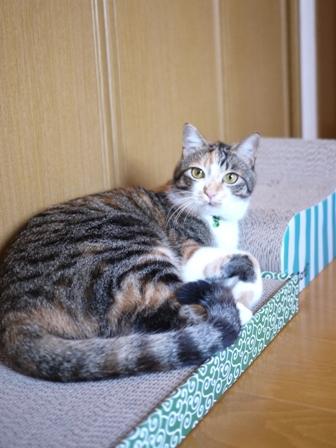 猫のお留守番 ゆきちゃんゆめくんあられくん編。_a0143140_20573613.jpg