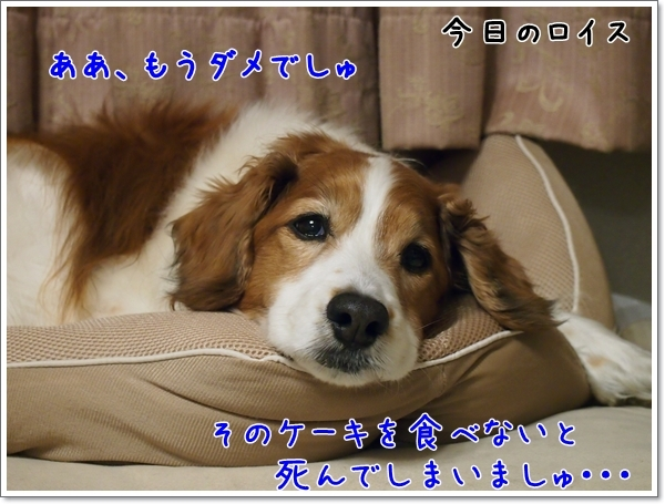 d0013149_23330182.jpg