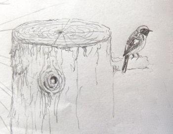 病院で描いた『野鳥のスケッチ』2_a0083553_812166.jpg