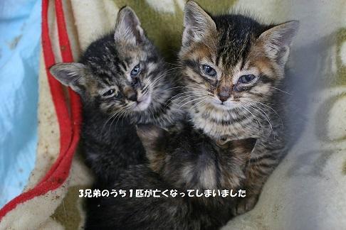 【お願い:追記】センター収容猫へのご支援をお願いします_f0242002_13252037.jpg