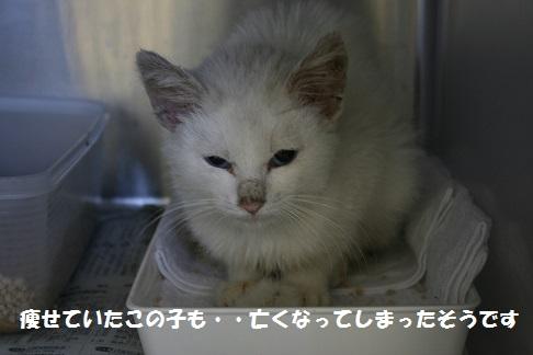 【お願い:追記】センター収容猫へのご支援をお願いします_f0242002_13254712.jpg