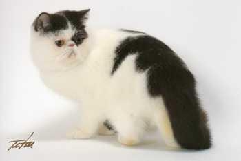 エキゾの猫達_e0033609_17104071.jpg