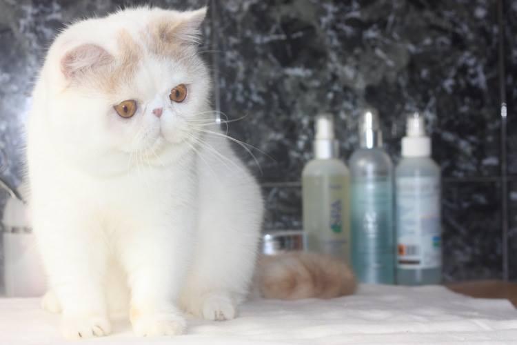 エキゾの猫達_e0033609_17302837.jpg