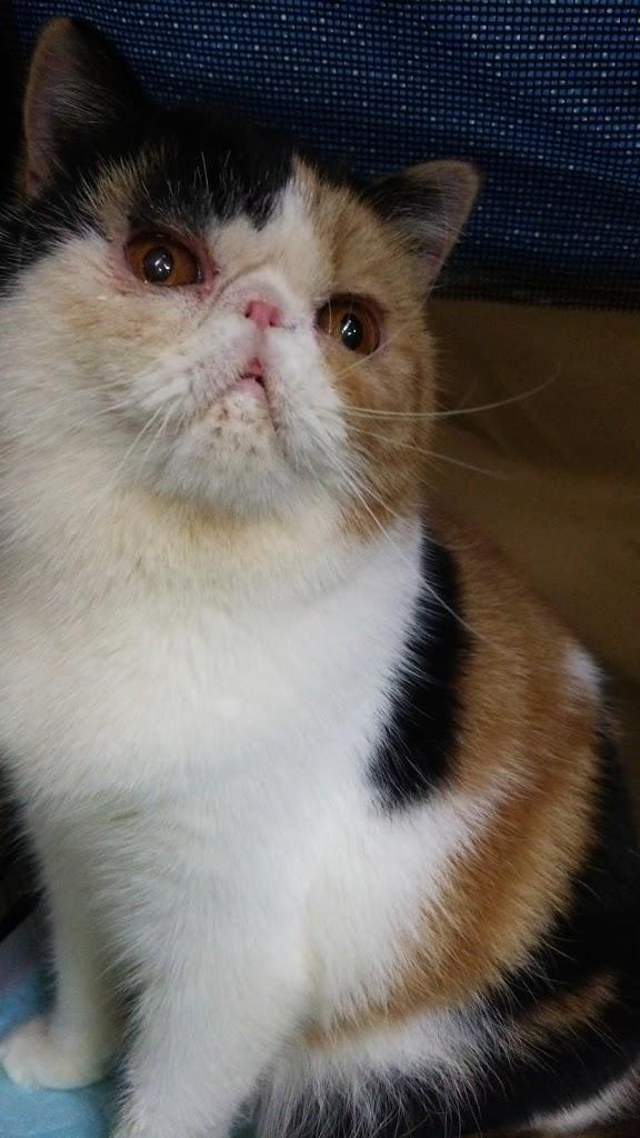 エキゾの猫達_e0033609_1773998.jpg