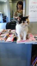 エキゾの猫達_e0033609_1782044.jpg