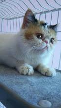 エキゾの猫達_e0033609_179328.jpg