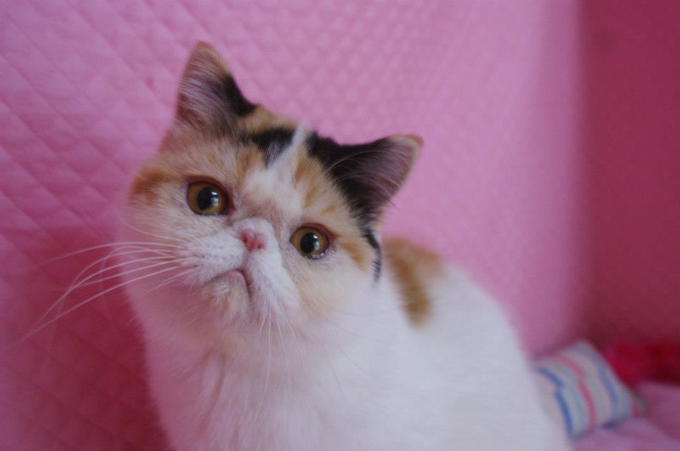 エキゾの猫達_e0033609_1795822.jpg