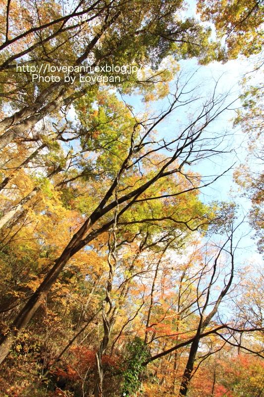 花貫渓谷の紅葉 Part2_c0136926_21394383.jpg