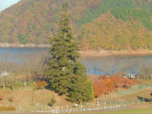 紅葉....綺麗です。_b0137932_2224879.jpg