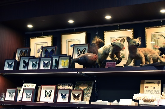 新規取り扱い・池袋三省堂書店本店内4階「Naturalis Historia~ナチュラルヒストリエ」_f0280238_21582383.jpg