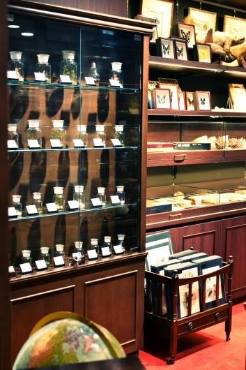 新規取り扱い・池袋三省堂書店本店内4階「Naturalis Historia~ナチュラルヒストリエ」_f0280238_21584311.jpg
