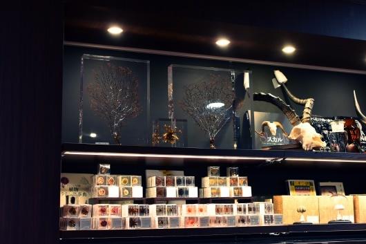 新規取り扱い・池袋三省堂書店本店内4階「Naturalis Historia~ナチュラルヒストリエ」_f0280238_22084132.jpg