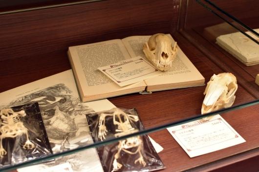 新規取り扱い・池袋三省堂書店本店内4階「Naturalis Historia~ナチュラルヒストリエ」_f0280238_22242311.jpg