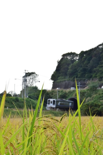 四国で撮り鉄♪_d0285540_23032657.jpg