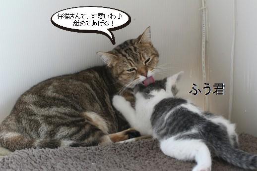 仔猫大好き、成猫さん♪親子じゃないけど_e0151545_20561804.jpg