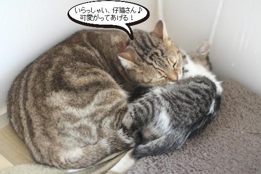 仔猫大好き、成猫さん♪親子じゃないけど_e0151545_20563344.jpg