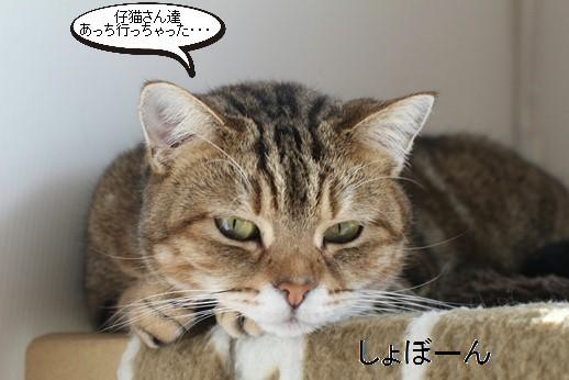 仔猫大好き、成猫さん♪親子じゃないけど_e0151545_20564687.jpg