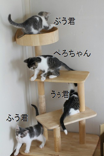仔猫大好き、成猫さん♪親子じゃないけど_e0151545_20565770.jpg