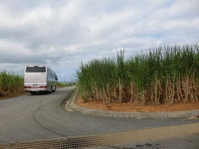 「さとうきび畑」沖縄4日目_f0019247_1122218.jpg