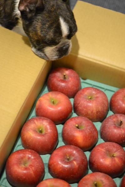 りんごパワー♪_b0307951_2333287.jpg