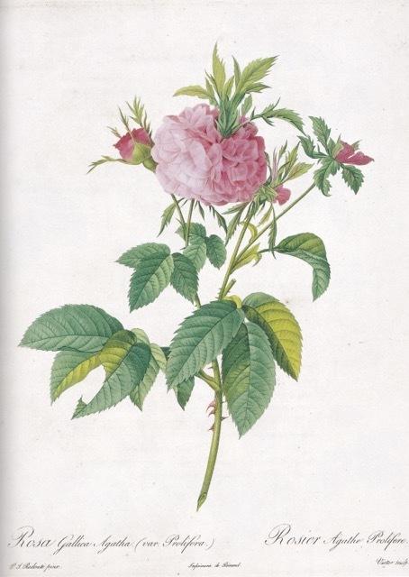 山梨県立美術館で開催中「花の画家 ルドゥーテのバラ」展 見どころ(5)_e0356356_19292418.jpg
