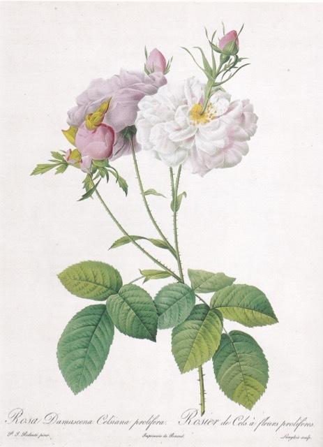 山梨県立美術館で開催中「花の画家 ルドゥーテのバラ」展 見どころ(5)_e0356356_19292766.jpg