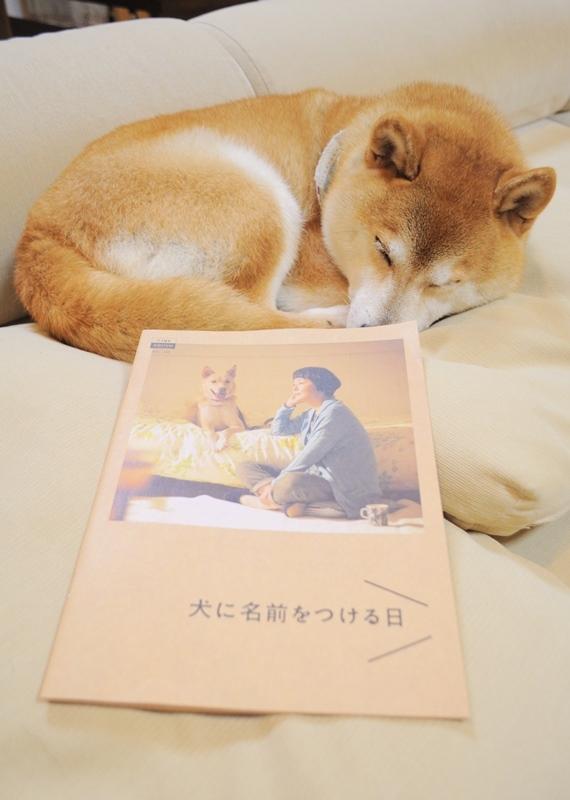 犬に名前をつける日_a0126590_00301829.jpg