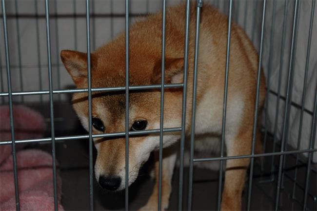 犬に名前をつける日_a0126590_01180238.jpg