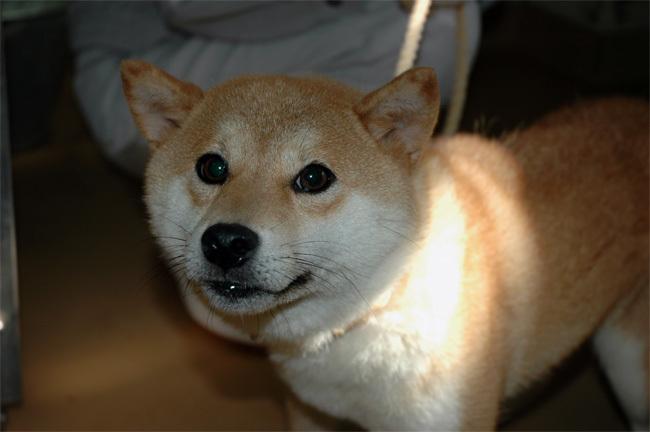 犬に名前をつける日_a0126590_01255611.jpg