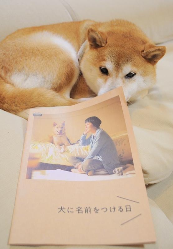 犬に名前をつける日_a0126590_01493531.jpg