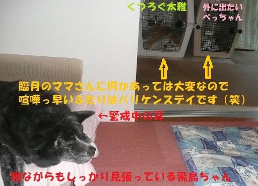 f0121712_2323537.jpg