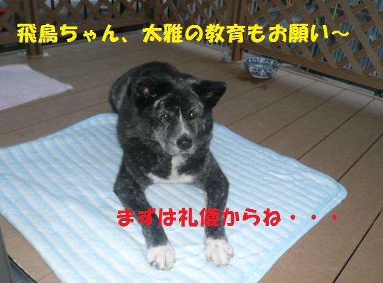 f0121712_239458.jpg