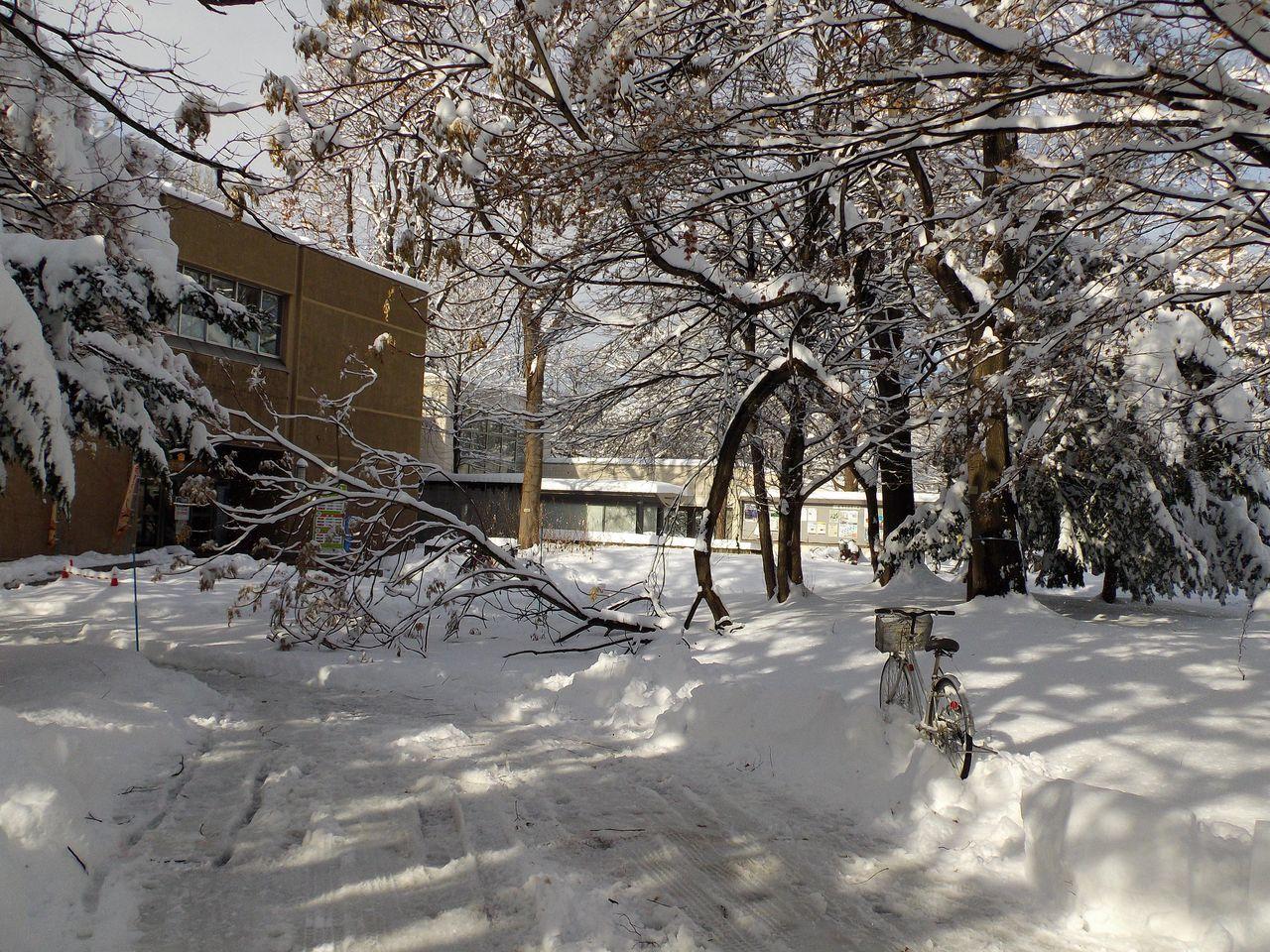 降って降って11月としては62年ぶりの大雪_c0025115_18470127.jpg