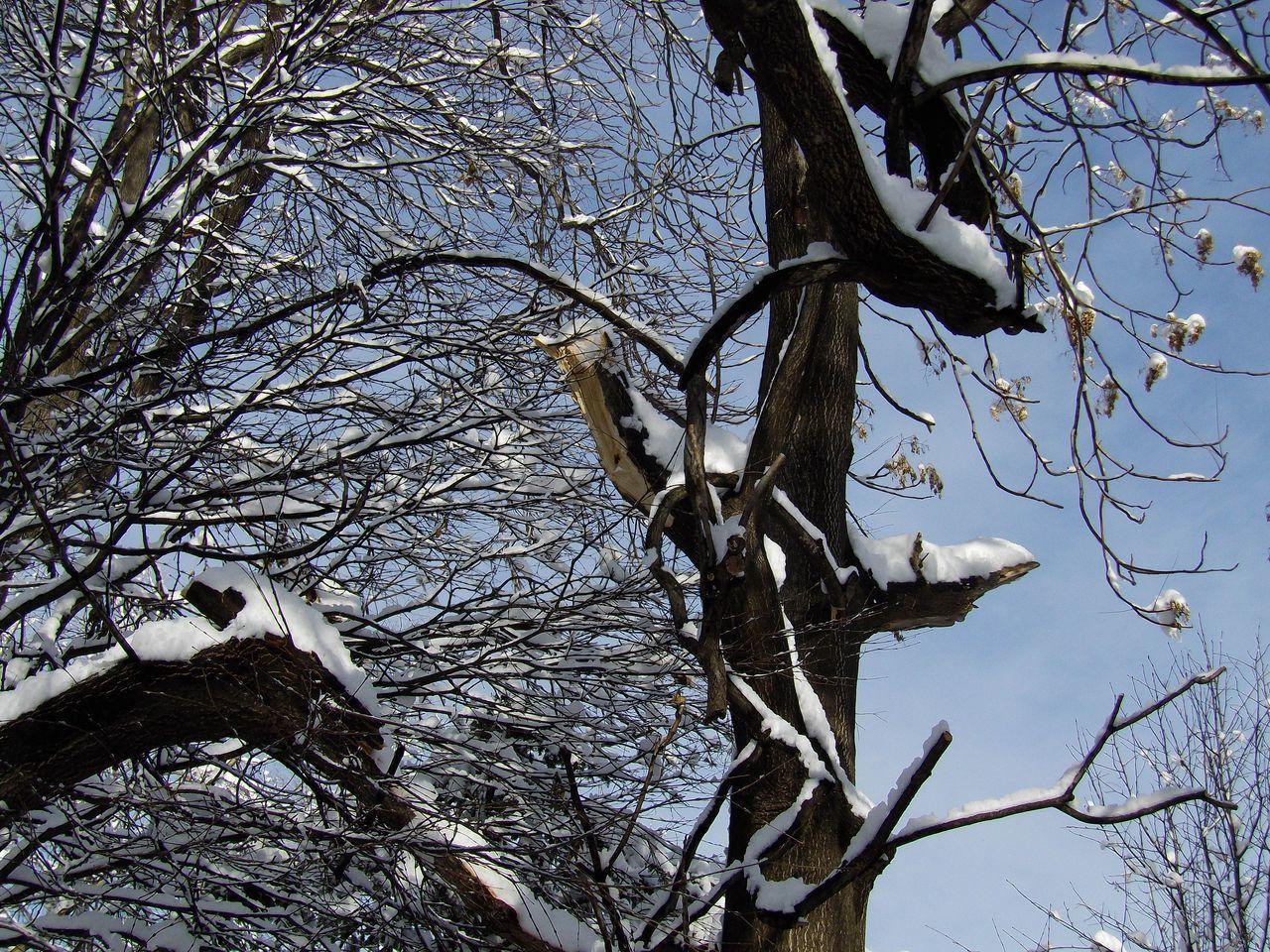 降って降って11月としては62年ぶりの大雪_c0025115_18470664.jpg