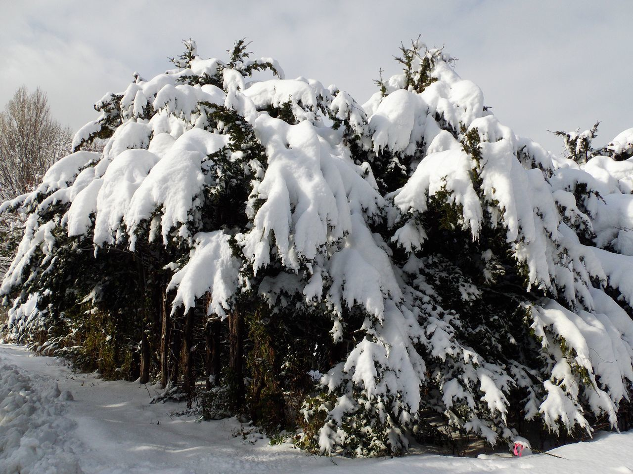 降って降って11月としては62年ぶりの大雪_c0025115_18495829.jpg