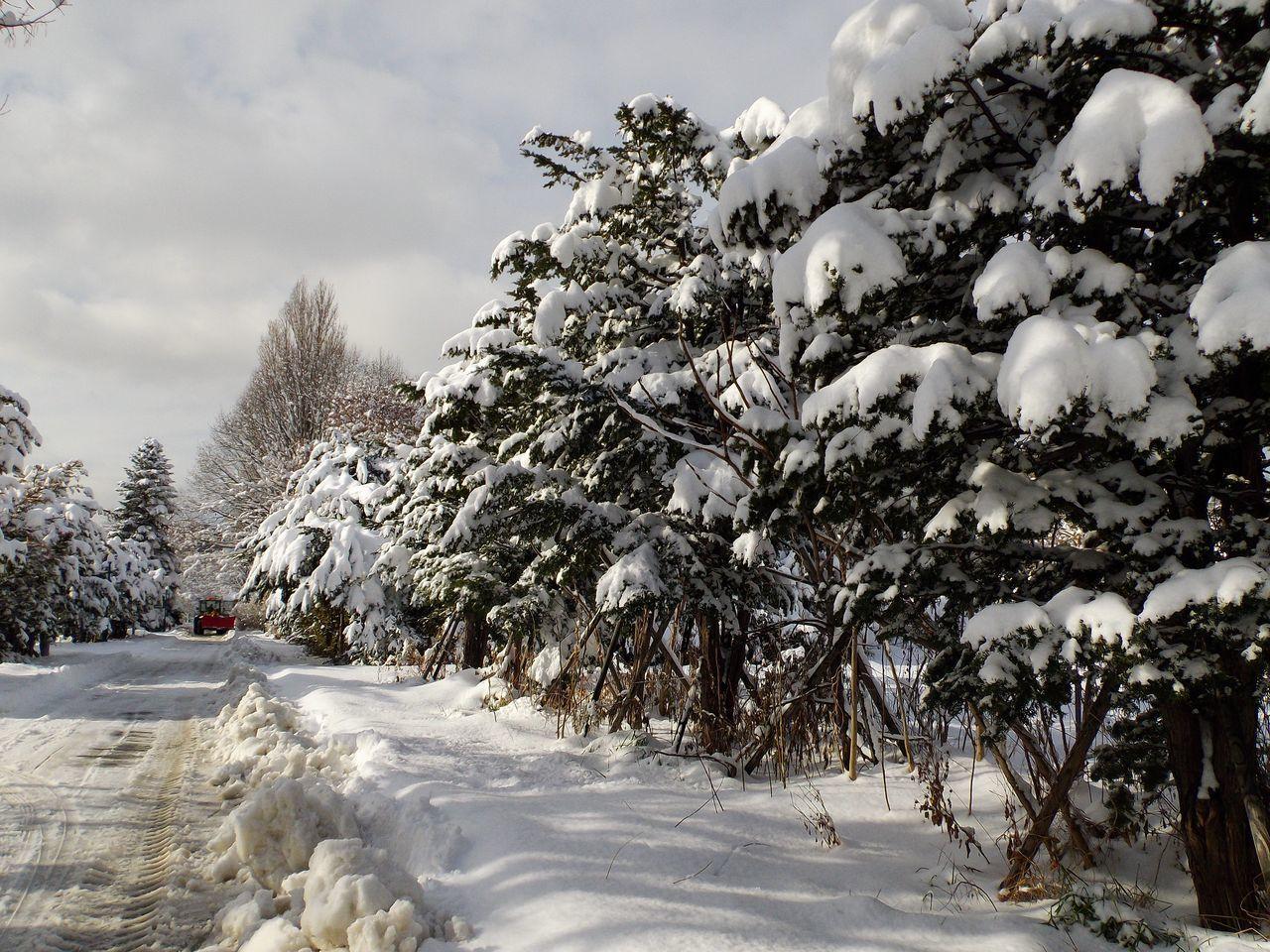 降って降って11月としては62年ぶりの大雪_c0025115_18500059.jpg
