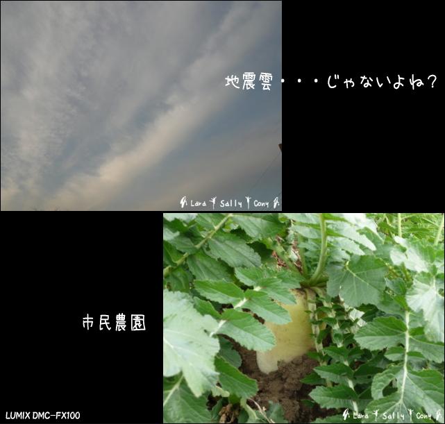 b0183917_12012256.jpg