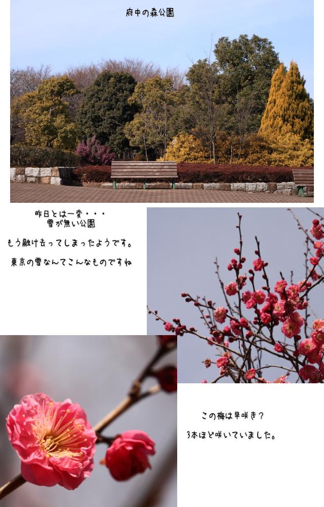 b0183917_12040744.jpg