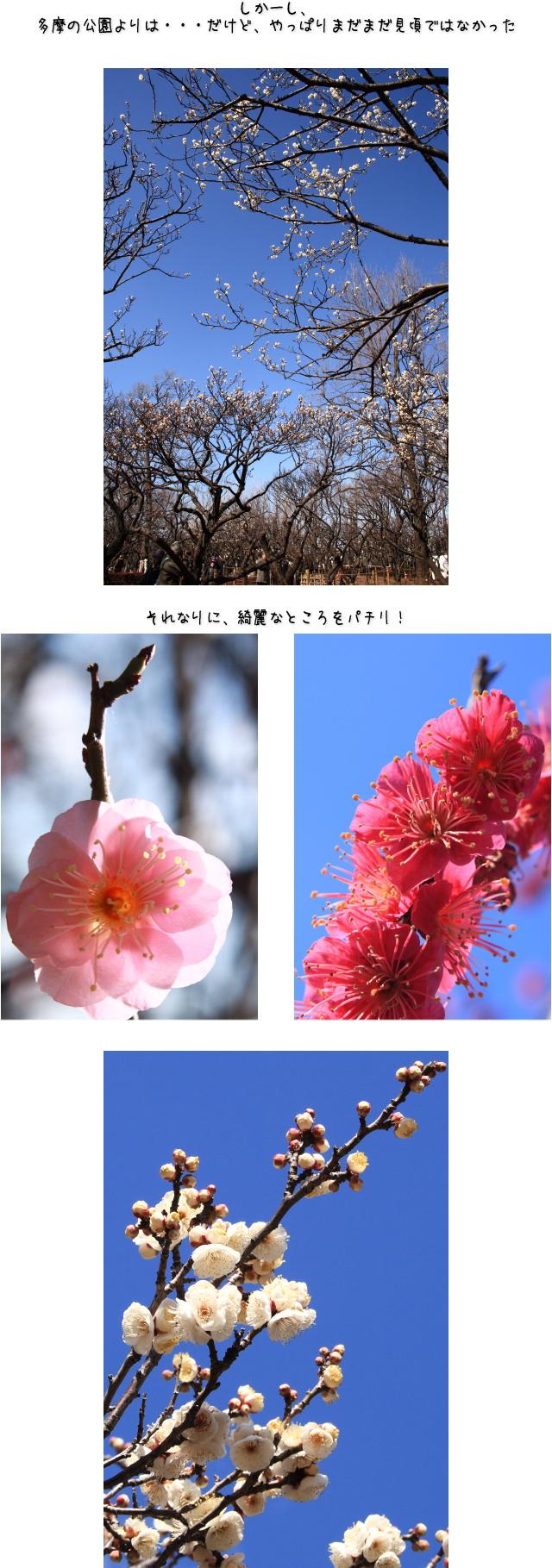 b0183917_12041517.jpg