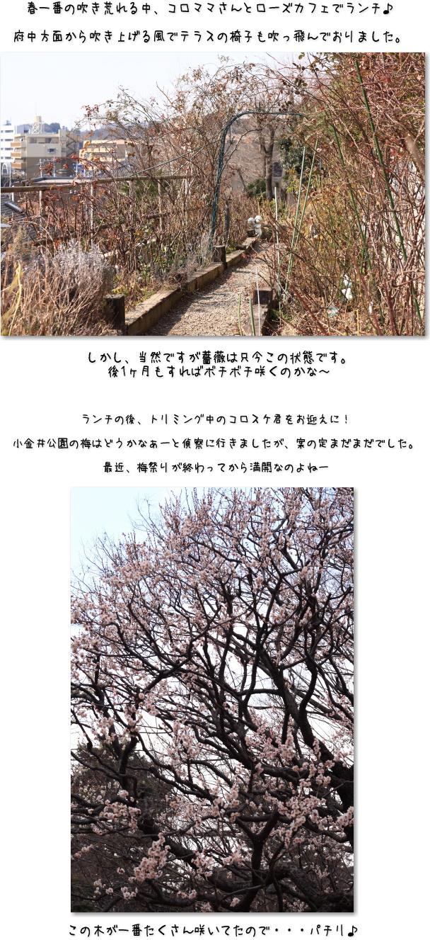 b0183917_12041961.jpg