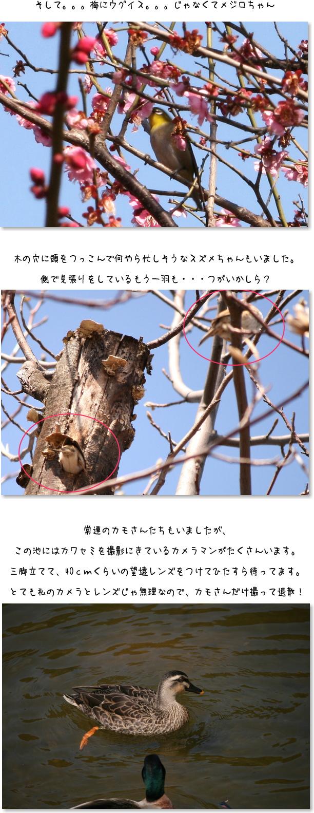 b0183917_12044637.jpg