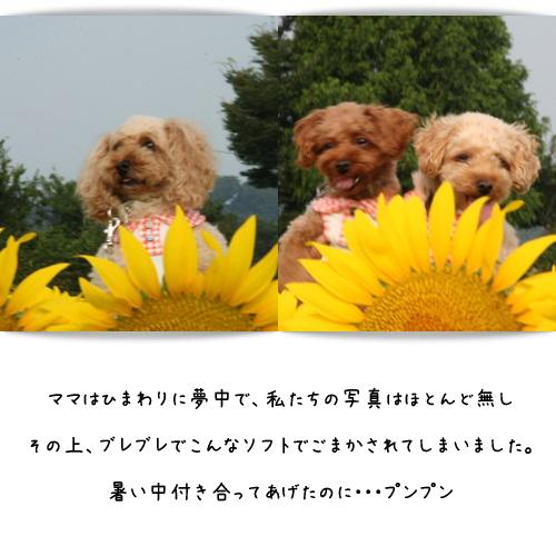 b0183917_12141462.jpg