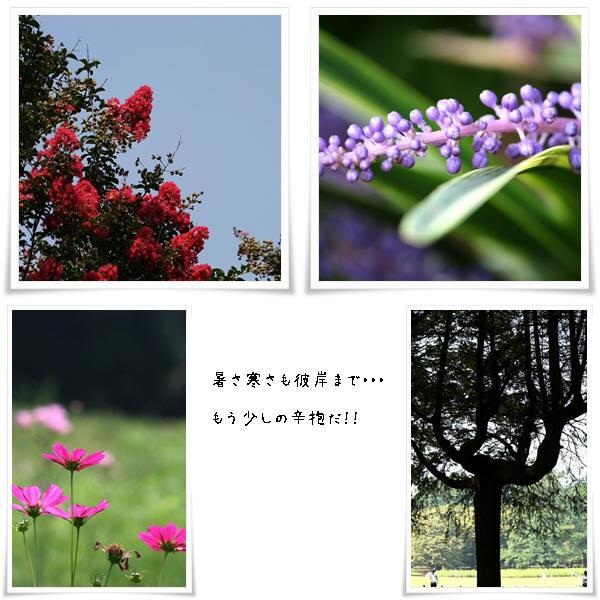 b0183917_12150599.jpg