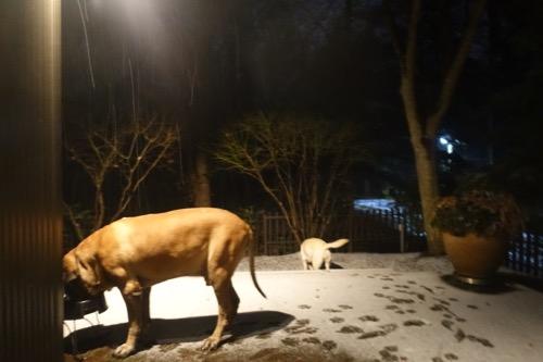 初雪です_e0192217_23394928.jpg