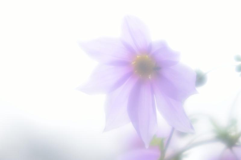 f0144018_17211958.jpg