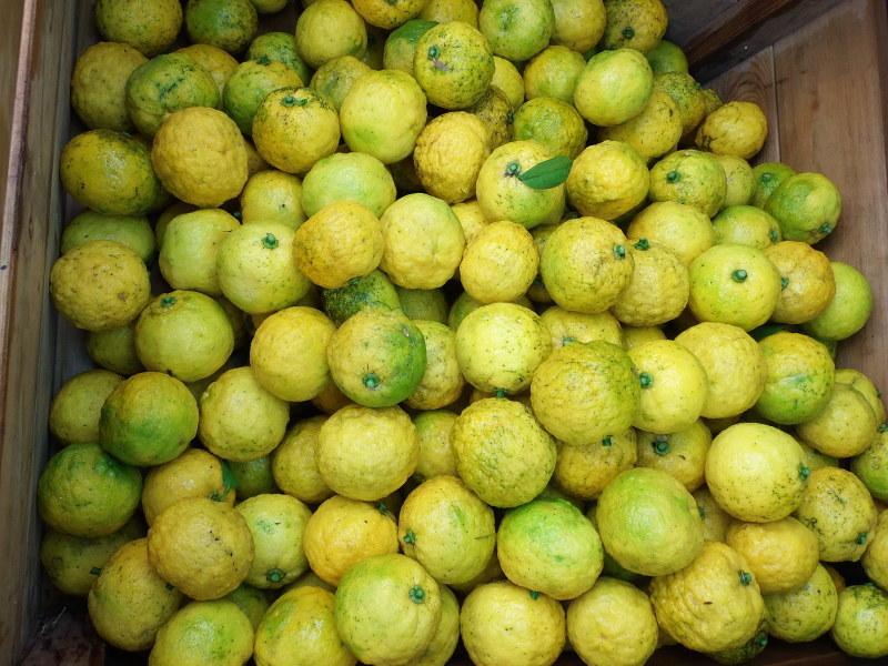 雨の中の「かぼす、柚子」狩りへ。_a0125419_11404486.jpg