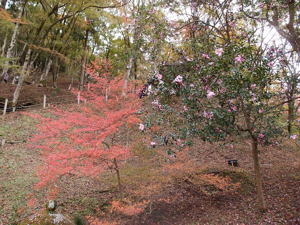 2015.11.22 香嵐渓_f0250322_21345745.jpg